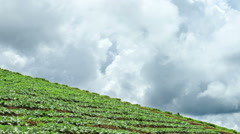 Seamlessly looping Time lapse of terraced vegetable field, Chiang Mai ,Thailand. Stock Footage