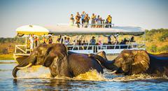 African Elephant Safari Stock Photos