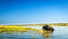 Chobe National Park Stock Photos