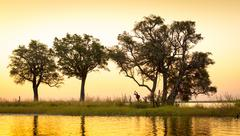 Chobe River Sunset Stock Photos