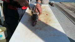Cutting fish in pieces. preparing a meal. Stock Footage