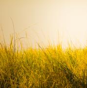 Grass on African Savanna Stock Photos