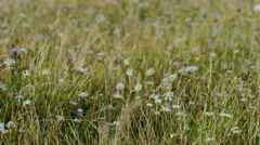 Long grass in a meadow wobbles in the wind Stock Footage