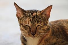 Portrait of a cat Stock Photos