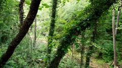 Arkansas Forest Stock Footage