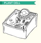 Diagram showing plant cell Stock Illustration