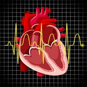 Human heart and graph show heartbeats Stock Illustration