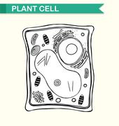 Diagram showing plant cell in black and white Stock Illustration
