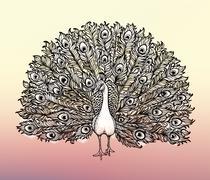 Clip-art Beautiful Handdrawn illustration Peacock bird consist many details. Stock Illustration