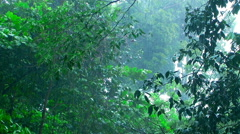 Rain cats and dogs in rainforest. Stock Footage