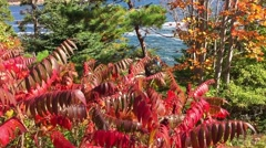 New England foliage Acadia National park coast Stock Footage