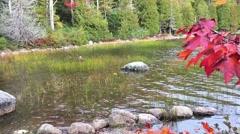 New England foliage Acadia National park lake Stock Footage