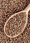 Top view of spoon full dried coriander seeds Coriandrum sativum Stock Photos
