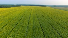 Flying backward over the fields Stock Footage