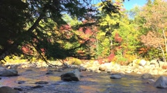 New England foliage trees and creek Stock Footage