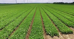 Countryside crop in long straight lines Stock Footage