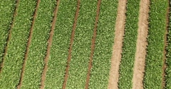 Aerial shot of countryside crop in long straight lines Stock Footage