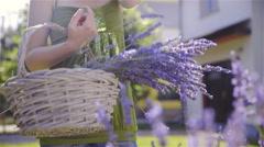 Person hold basket of harvested lavender dolly slide 4K Stock Footage