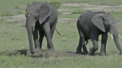 African elephant at waterhole, lock shot in high angle Stock Footage