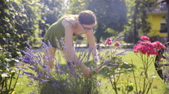 Woman cutting small lavender bush on home garden 4K Stock Footage