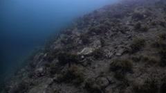 Stones, inhabitants and vegetation on bottom. Stock Footage