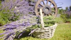 Lavender boutique inside a basket dolly slide 4K Stock Footage