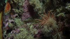 White anemones and yellow sponge on a stone floor. Stock Footage
