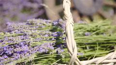 Dolly slide over harvested lavender flower closeup 4K Stock Footage