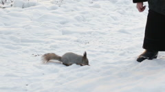 Squirrel in winter Stock Footage