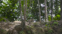 A Group of Wild Monkeys Walks in Forest. Slow Motion Stock Footage