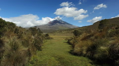 Cotopaxi through the Meadow Stock Footage