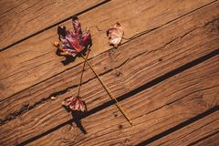 High angle view of autumn leaves on floorboard Stock Photos