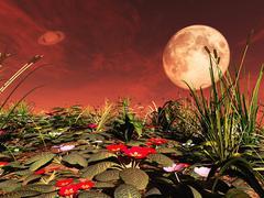 Amazing flowers on exoplanet. 3D rendering Stock Illustration