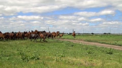 Herd of horses galloping on the background of green field Stock Footage