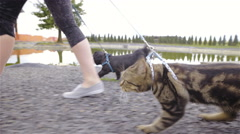 Owner pulling cat and dog with leash walking together 4K Stock Footage