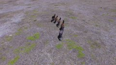 Wild Horses - Five Running Stock Footage