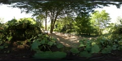 360 VR Relaxing corner with bench under tree shadow path Stock Footage