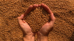 Two hands pouring out wheat with rotation Stock Footage