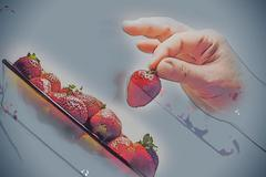 Woman hand hold red ripe strawberry Stock Illustration