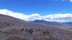 Wild Horses Trot on the Side of Cotopaxi Volcano Stock Footage
