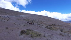 Wild Horses on the side of Cotopaxi Volcano Stock Footage