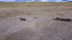 Wild Horses Trot over the Open Plain Stock Footage