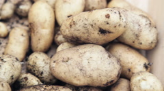 Fresh Potato Harvest Stock Footage