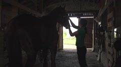 Woman rider brushing horse and prepare animal for dressage Stock Footage