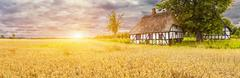 Typical Danish Picturesque old houses and wheatfield at Sunrise Stock Photos