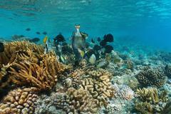 Coral reef fish titan triggerfish Pacific ocean Stock Photos