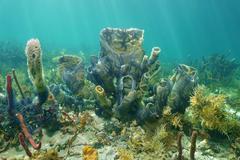 Marine life branching vase sponge brittle stars Stock Photos