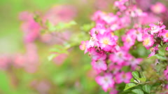 Close up bloom pink flower with wind blow and flying bubble. Stock Footage