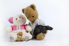 Rats and old soft toys. Stock Photos