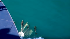 Dolphins in fron fo ship Stock Footage